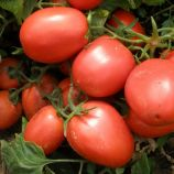 Шейк семена томата дет. (Semo)