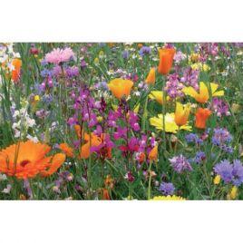 Многолетники гномики на 100 кв. м семена цветочной смеси (Nova Flore)