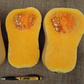 Лаура семена тыквы мускатной ранней 80-90дн. 1-1,5кг (Semo)