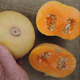 Натрия F1 семена тыквы (Semo)