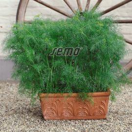 Компакт семена укропа (Semo)