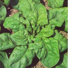 Матадор семена шпината (Semo) НЕТ ТОВАРА