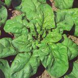 Матадор семена шпината (Semo)