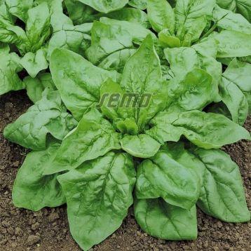 Монорес семена шпината овал. (Semo)