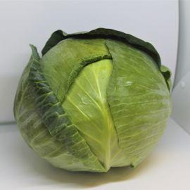 ЕС 2144 F1 (ЕS 2144 F1) семена капусты б/к средней 85-90 дн. 4-5 кг окр.-припл. (Ergon seeds)