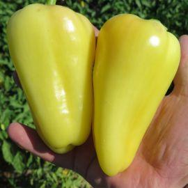 Амур F1 семена перца сладкого тип Венгерский раннего 90-100 дн. конич. 120-130г. желт./красн. (Solare Sementi)