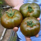 TS 03-0079 F1 семена томата индет. раннего 180-190 гр. черн. (Solare Sementi)