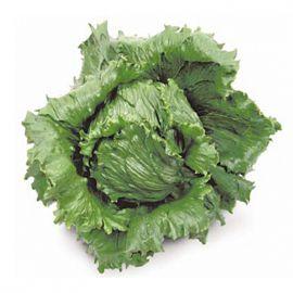 Куала семена салата тип Айсберг зел. дражированные (Nunhems)