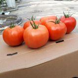 Капонет F1 насіння томата напівдет. 220-250 гр. (Syngenta)