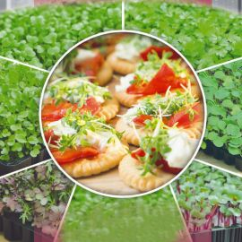 Кресс-салат семена микрозелени (Seedera)
