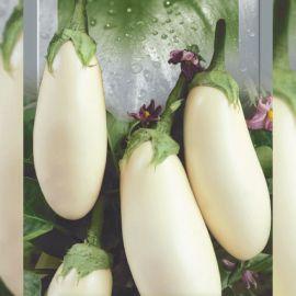 Клара семена баклажана белого (Seedera)
