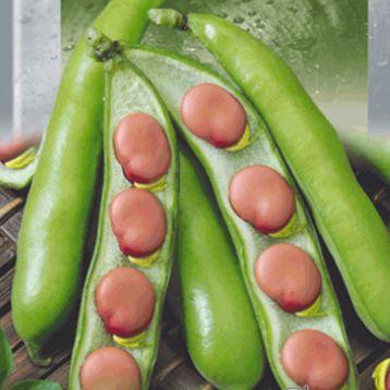 Кармазин семена бобов коричн. (Seedera)