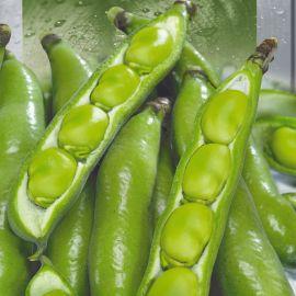 Хангдалин семена бобов зелен. (Seedera)