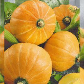 Амазонка семена тыквы окр. 1-1,5 кг (Seedera)