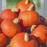 Конфетка (Цукерка) семена тыквы средней 115-120 дн. окр. 1,5-2 кг красн. (Seedera)
