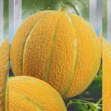 Эфиопка семена дыни средней 70-80 дн. окр. 3-7 кг сетчат. (Seedera)
