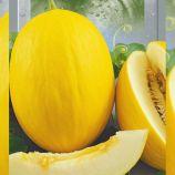 Криничанка семена дыни ранней 2-2,5 кг овал. желт. (Seedera)