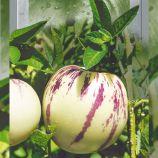Пепино семена окр бел (Seedera)