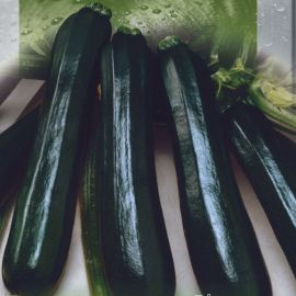 Оникс семена цуккини раннего цилиндр. 1 кг темн. зел.(Seedera)