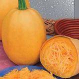 Спагетти Равиоло семена кабачка среднего 55-65 дн. цилиндр.0,7-2,2 кг 30 см желт. (Seedera)