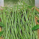 Макарена вигна семена фасоли китайской зеленой (Seedera)
