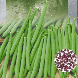 Красная вигна семена фасоли китайской (Seedera)