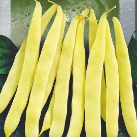 Мавка семена фасоли кустовой желтой (Seedera)
