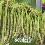 Хеминез семена фасоли спаржевой вьющейся зеленой (Seedera)