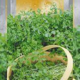 Кудрявый семена кресс-салата 32-45 дн. зел. (Seedera)
