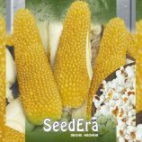 Пинг Понг семена кукурузы попкорн среднеспелой до 15 см (Seedera)