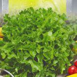 Салат балконный зеленный семена (Seedera)