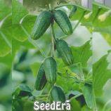 Колибри F1 семена огурца корнишона партекарп. 10-12 см (Seedera)