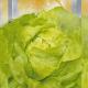 Бона семена салата тип Маслянистый лимон. (Seedera)