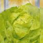 Бона насіння салату тип Маслянистий (Seedera)