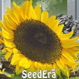 Ласунка семена подсолнуха (Seedera)