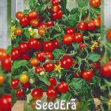 Бонсай семена томата дет. черри ультрараннего 85-90дн комнатного окр. 20-30г красн. (Seedera)