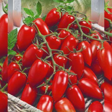 Детский сладкий семена томата дет. коктел. ультрараннего 80-85дн слив. 30-40г красн. (Seedera)