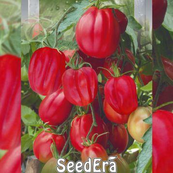 Этуаль семена томата индет. среднего ребр. 150-300г розов. (Seedera)