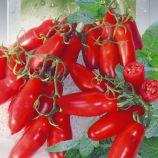 Черевички насіння томата індет. середнього перцв. 50-80г черв. (Seedera)