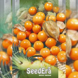 Ананасовый семена физалиса (Seedera)
