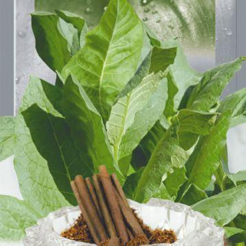 Дюбек семена табака курительного (Seedera)