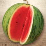 Ярило семена арбуза раннего 60-70дн. овал. 4-4,5кг полос. (Семена Украины)