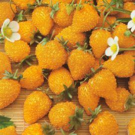 Желтое чудо семена земляники (Семена Украины)
