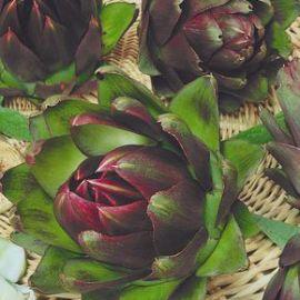 Артишок фиолетовый семена (Семена Украины)