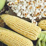 Вулкан семена кукурузы поп-корн (Семена Украины)