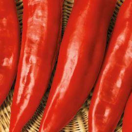 Горн красный семена перца сладкого среднего 130-140дн. до 20см 5-6мм удл.-конич. зел./красн. (Семена Украины)