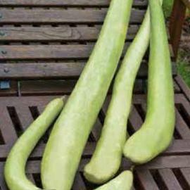 Змеевидная семена лагенарии (Семена Украины)