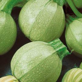 Колобок семена кабачка среднераннего 40-52дн 400-600гр окр. св.-зел. (Семена Украины)