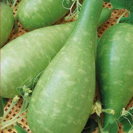 Бутылочная семена лагенарии (Семена Украины)