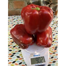 1601 F1 семена перца сладкого тип Блочный раннего корот.куб. 65дн. 220-280гр. красн. (Lark Seeds)